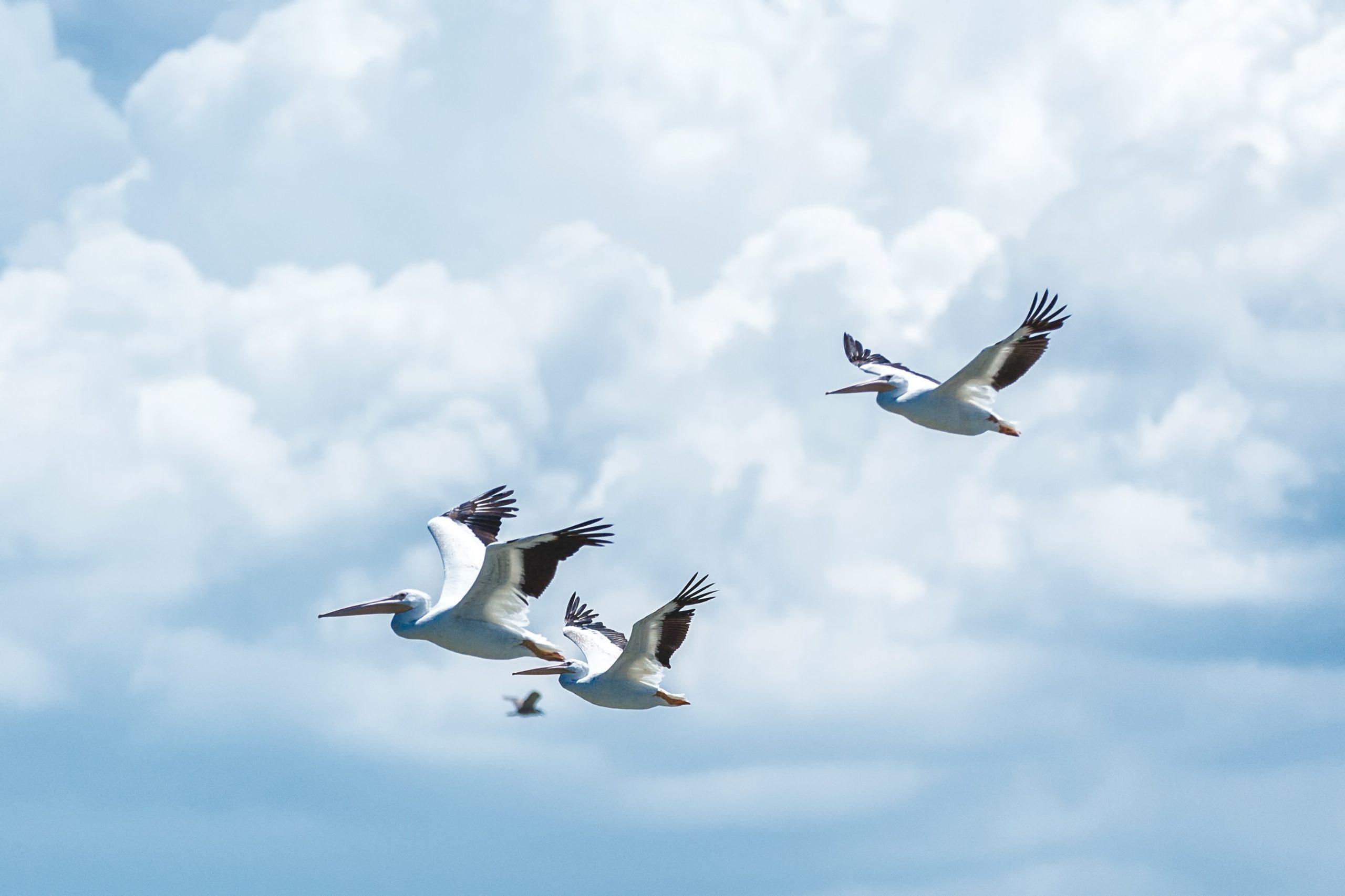 Sự hài hòa giữa Trời và Đất – giải pháp tỷ đô và còn bảo vệ các loài chim